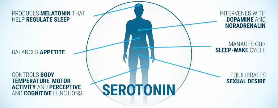 key role of Serotonin in the human body